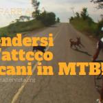 Difenderti dall'attacco dei cani quando sei in mountain bike