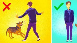 resta indifferente al cane