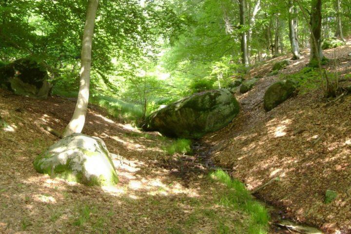 Monte Avigno sentiero MTB